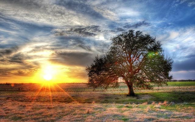 Sunset on a Texas farm