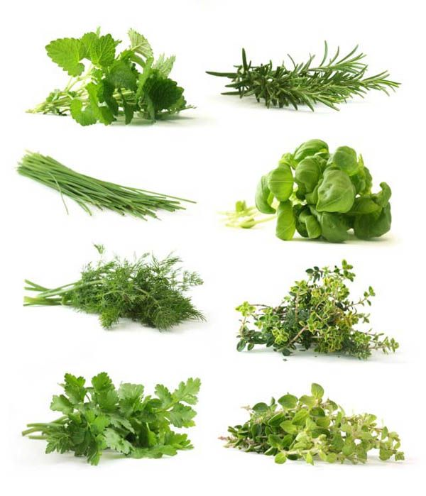 Alfalfa: diabetes, arthritis, purifies the blood, stimulant, antibacterial.  Chives: antiseptic   Cilantro: digestive aid and diuretic. Detoxification of heavy metals.  Dill: gastro-intestinal   Garlic:antibacterial, antiseptic, antifungal, antiviral, and anti-parasitic   Ginger: digestive aid   Mint: antiseptic and cleansing   Oregano: antimicrobial and antiviral .  Parsley: diuretic and tonic.  Rosemary:  antiseptic, antimicrobial, and diuretic.  Thyme: antiseptic and antimicrobial