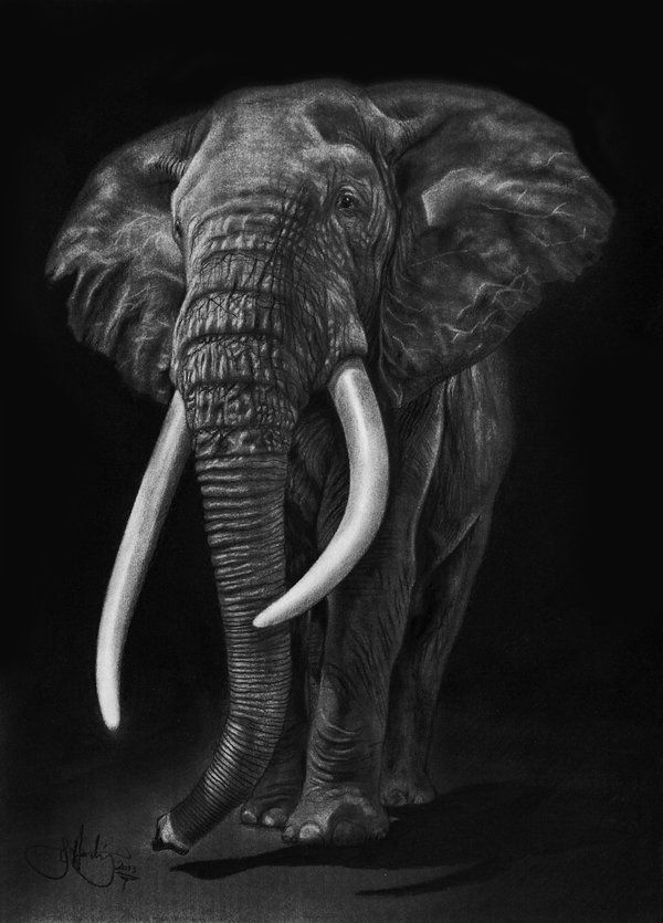 "African Elephant drawing by WhizzieWhizzer on DeviantArt - ""Out of the Darkness"" - little A3 drawing using graphite powder & carbon powder and staedtler pencils"