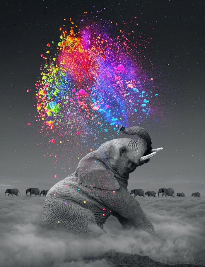 elephant, dreams, dream in color, rainbow...