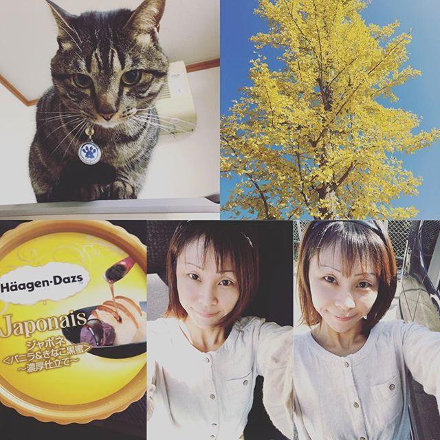 ラムちゃん、いい天気だね☀️☆冷蔵庫の上眺めはいかがかな❔☆ママお天気だから散歩してきた☆イチョウの木の黄色がキレイ✨☆あったか☆コンビニで新発売のハーゲンダッツの、バニラ&きなこ黒蜜食べた☆ハーゲンダッツはやっぱり美味しいわ🍨☆ #愛猫#らむ#さばとら#ねこ #ねこすたぐらむ #ねこ部  #ねこのいる生活 #愛猫家 #にゃんこ #にゃんすたぐらむ  #猫#ねこのきもち #ねこすきさんと繋がりたい  #ハーゲンダッツ  #アイス #いちょう  #いちょうの木  #散歩 #青空 #いい気持ち #笑顔と優しい気持ちで