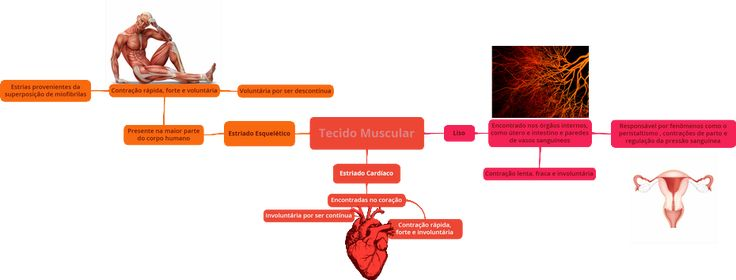 mapa-biologia-Tecido_Muscular
