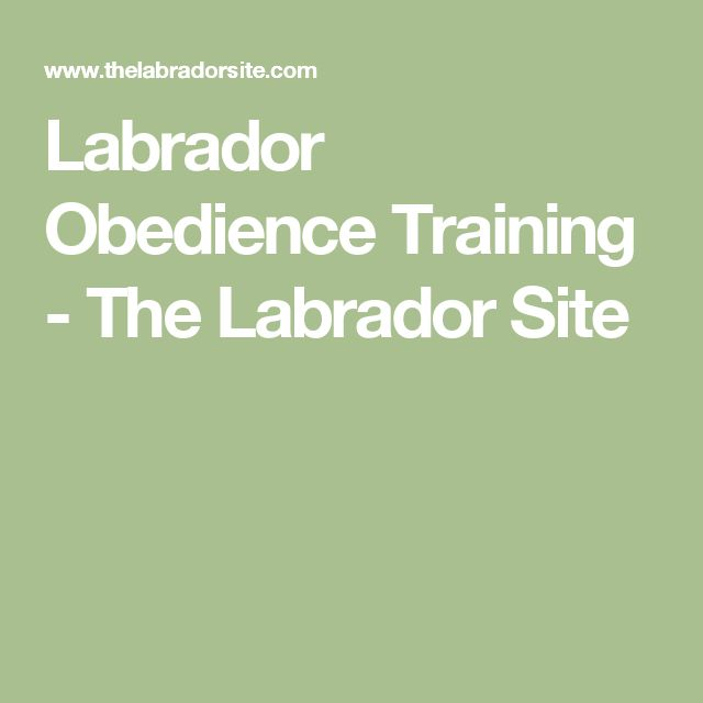 Labrador Obedience Training - The Labrador Site