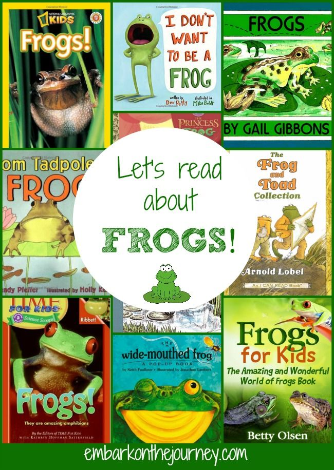 Learn about frogs with these fun picture books! | embarkonthejourney.com