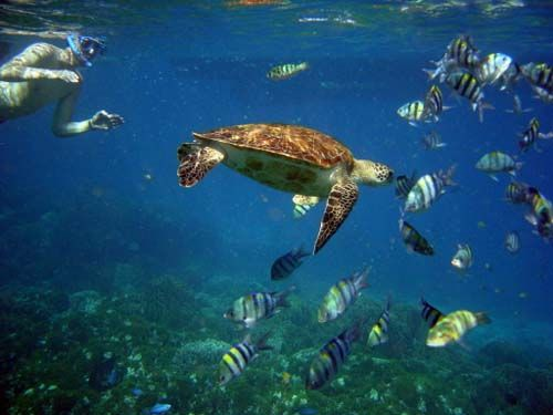 Definitely up for this kind of snorkeling! Reminds me of my honeymoon 21 years ago.