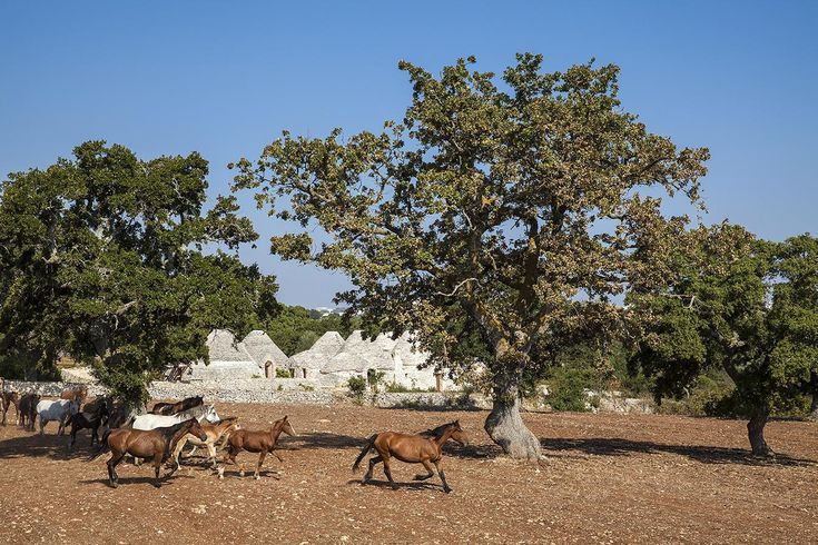 Amazing #trulli in the Apulian #countryside. What a dream!