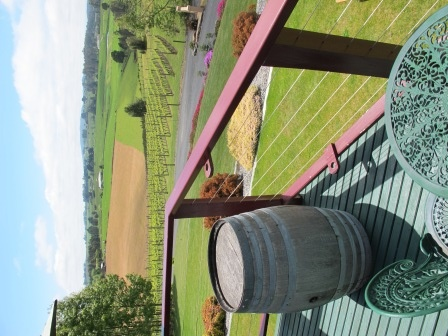 Barringwood Park Vineyard - this is the view (and the people) that started the Tassie Dream for us
