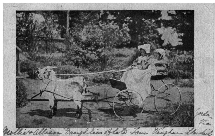 This postcard was sent to my grandmother by the Vaughan family of Learmonth, Victoria. It shows Alison and Mollie Vaughan riding in a goat cart.