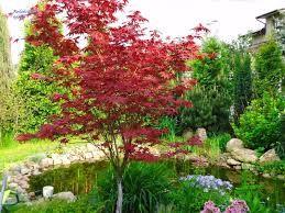 Znalezione obrazy dla zapytania klomb pod drzewami z kwiatami