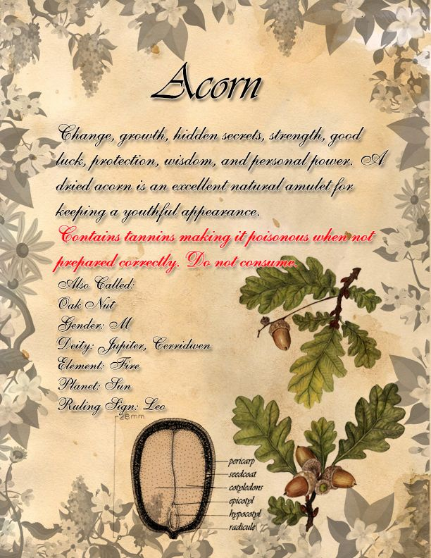 Book of Shadows: Herb Grimoire - Acorn by CoNiGMa