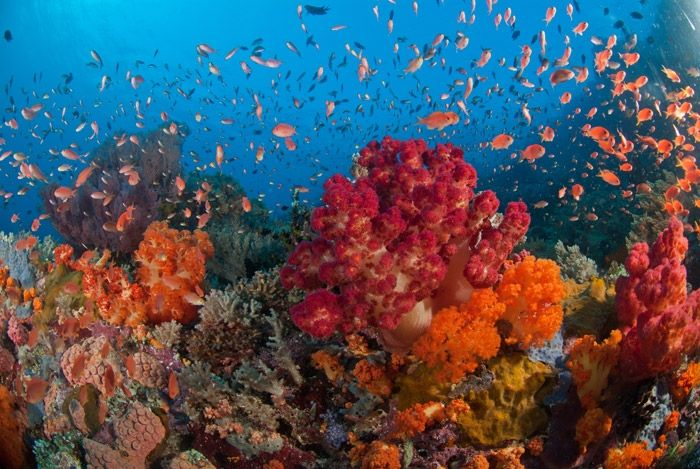 Travel News: Top 10 Most Beautiful Reefs in the World ... 10 Most Beautiful Coral Reefs World