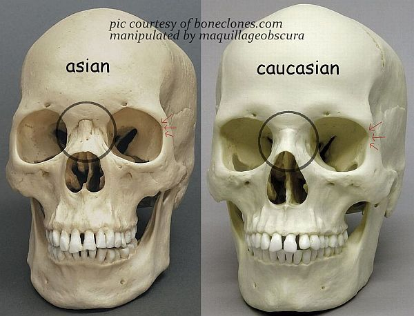 asian skull vs caucasian skull | The Difference Between Asian and Caucasian Eyes