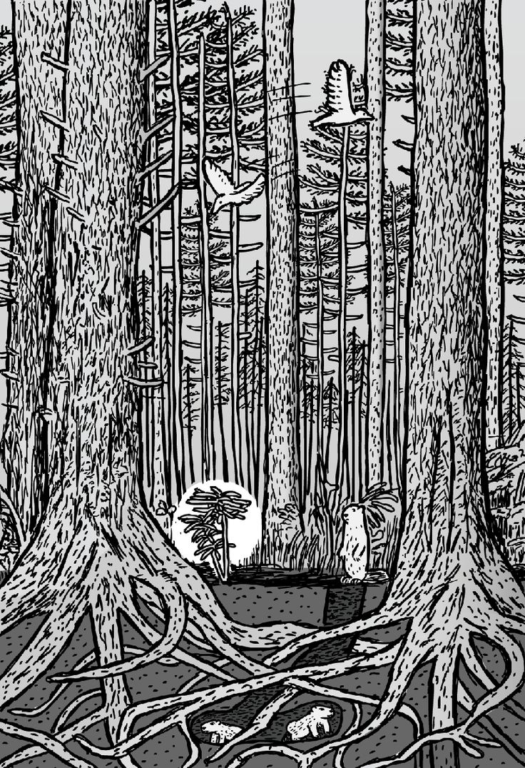 Mature forest stand. Activity occurs on all levels, as a multitude of organisms maximise the horizontal and vertical spaces.. Image from Stuart McMillen's comic Type III.