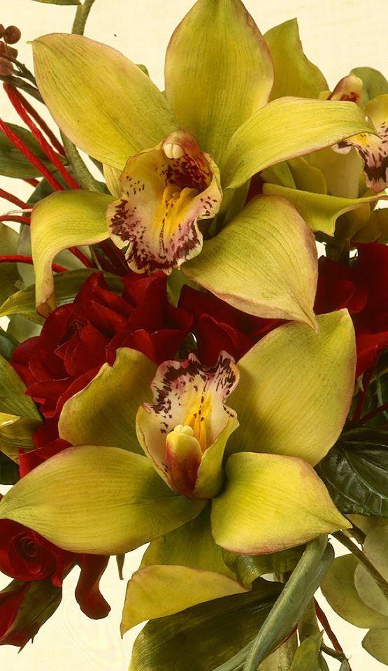 Alan Dunn - Sugar Orchids