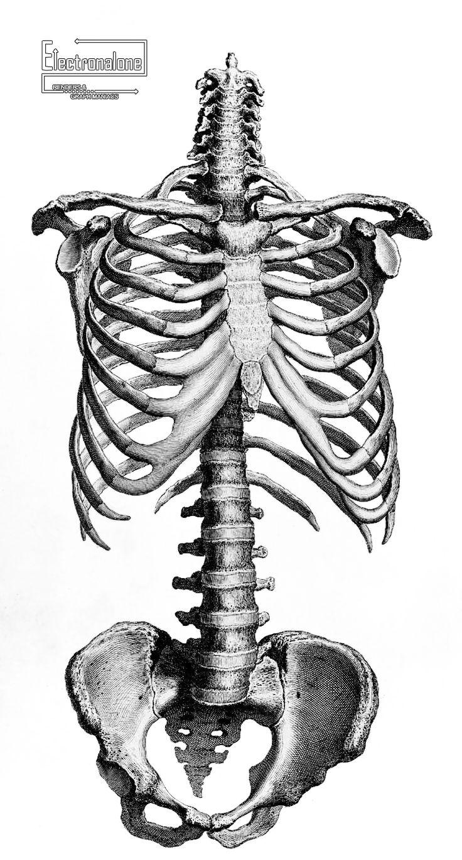 Célèbre Les 25 meilleures idées de la catégorie Squelette humain sur  YR93