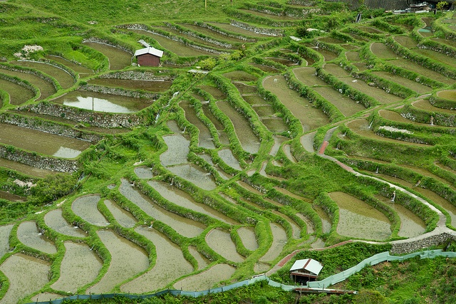 Terraced rice paddies in rural Japan, Mie : photo by ippei + janine, via Flickr