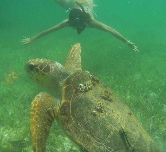 Le testuggini, fide compagne di avventura, ci hanno affiancato insieme a piccoli squaletti e coloratissimi pesci durante la nostra esplorazione della barriera corallina.