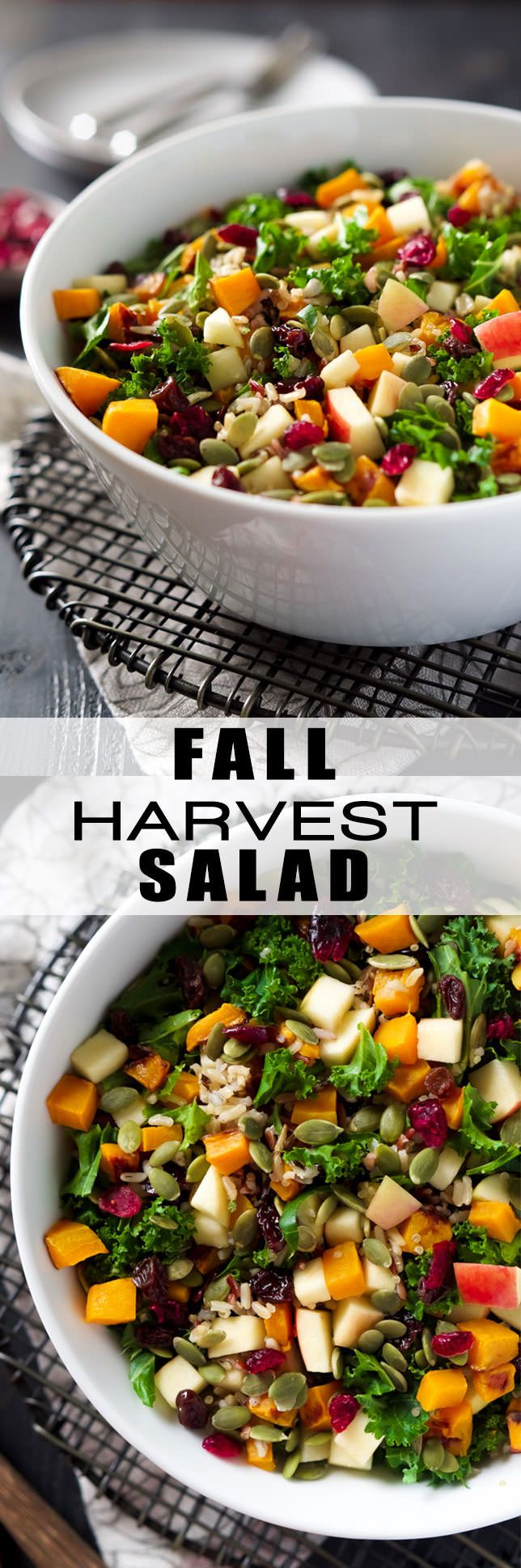 This Fall Harvest Salad is full of fall flavors; roasted butternut squash, tender wild rice, pepitas, apples, and hearty kale, with an apple cider dressing!