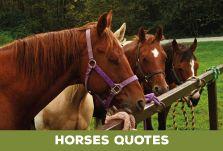 www.terradicuma.com si prende cura dei tuoi cavalli.
