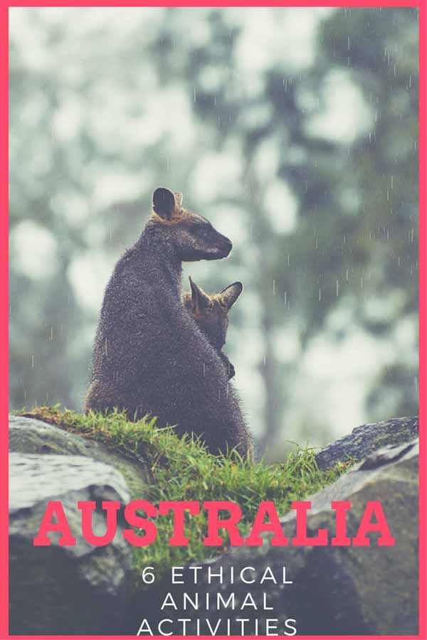 Responsible travel in Australia - 6 ethical animal activities from all over the country! #Australia #responsibletravel #seeaustralia