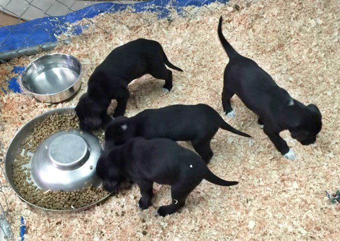 What Is The Best Source Of Puppies Puppy Litter Dog Food