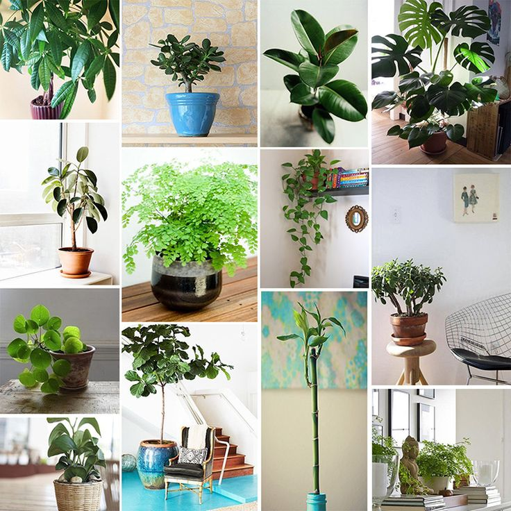 Favorite Feng Shui-Friendly Houseplants: Jade Rubber plant Bird of paradise Peace lily Assorted ferns Bamboo Dracaena Ficus plant P...