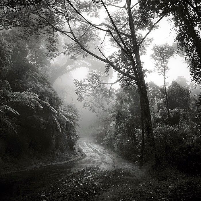 Photography Black And White Nature