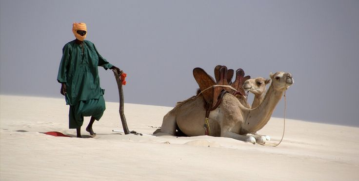 Camel, Boavista island, desert dune
