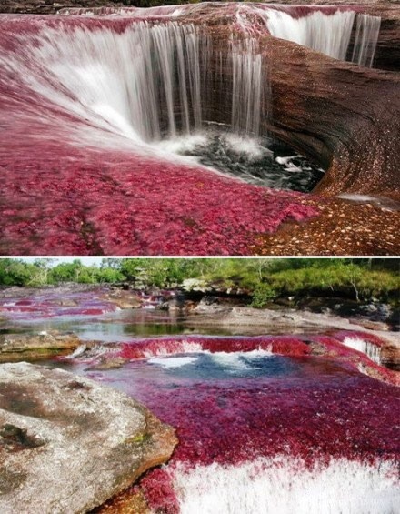 Cano Cristales, Villavicencio, Columbia