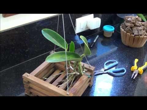 Vídeo ensina como fazer divisões em orquídeas epífitas e como plantas as mesmas.