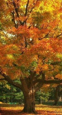 All dressed in autumns glory