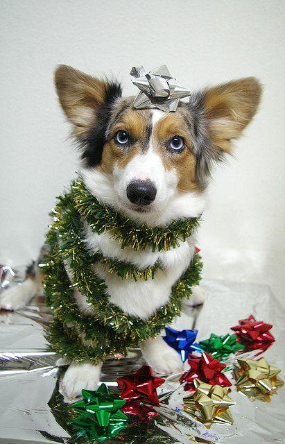 Christmas Corgi Tree: