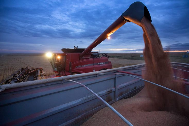 The Globe and Mail Series on Wheat | Farms.com