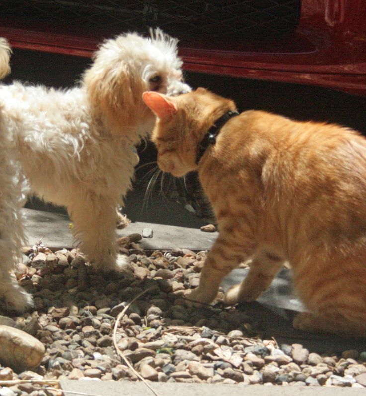 My dog giving the cat a smooch.