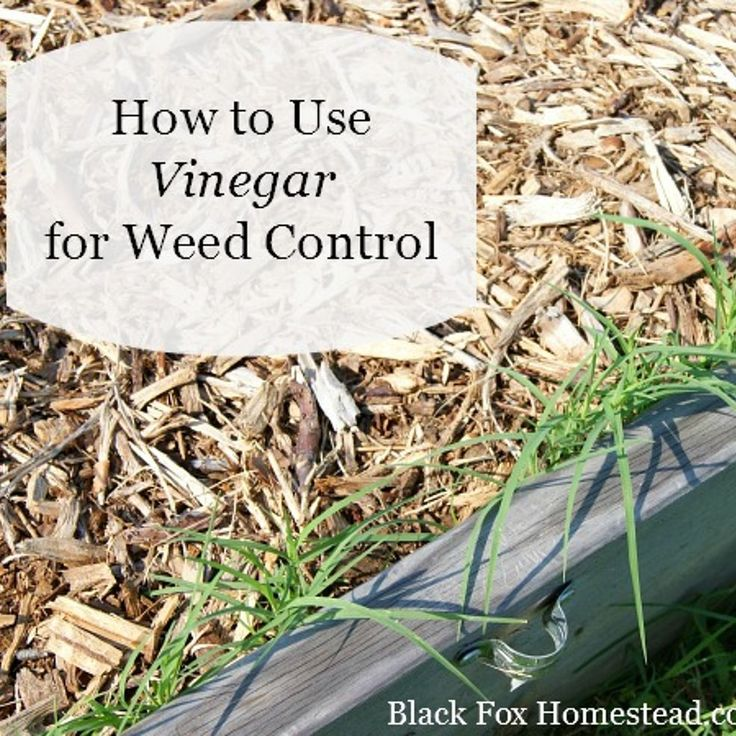 Use vinegar for natural weed control natural weed and - Weed killer safe for vegetable garden ...