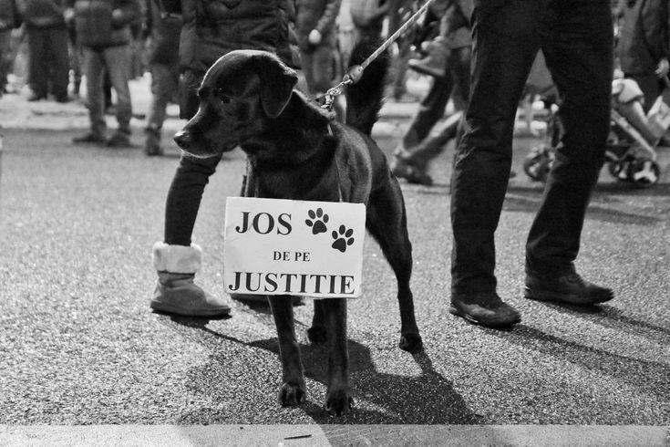 Jos labele de pe justiție! © Daniel Mihai