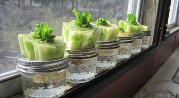 10 légumes à faire pousser à l'infini chez soi