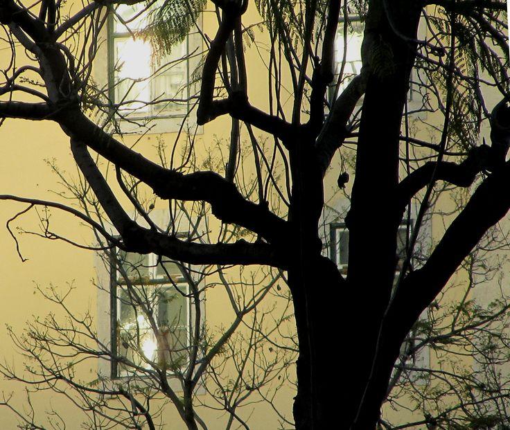 {Árvores de Inverno}  - Chiado ►[Lisboa é POESIA]  ► http://lisboalxpoesia.wordpress.com/_inscricao/