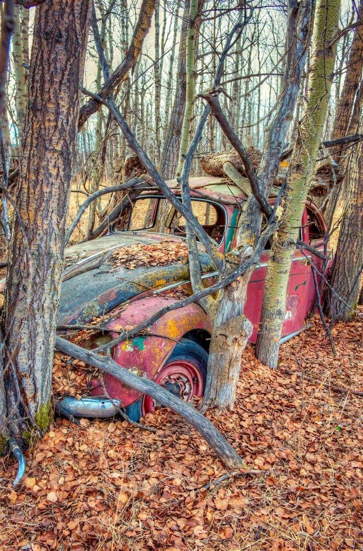 Wood Piles. Photo by Wayne Stadler. Source Flickr.com