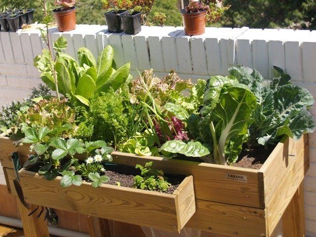 Cómo elegir una mesa de cultivo para el huerto urbano