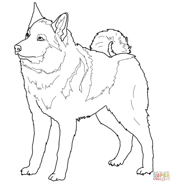 Volwassen Kleurplaat Wolf Norwegian Elkhound Super Coloring Dog Patterns