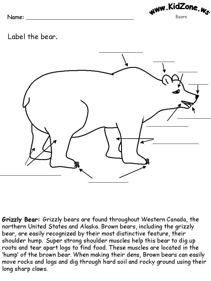 Label the Bear Worksheet school