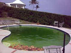 My Swimming Pool Is Green: How To Clean Pool, Shock Pool, & Get Rid Of Algae?