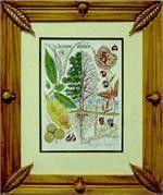 American Chestnut Botanical Print in Hand-Carved Chestnut Frame