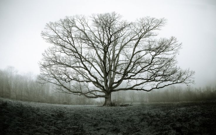 Virginia1 880x550 Old Tree on a Foggy Virginia Morning