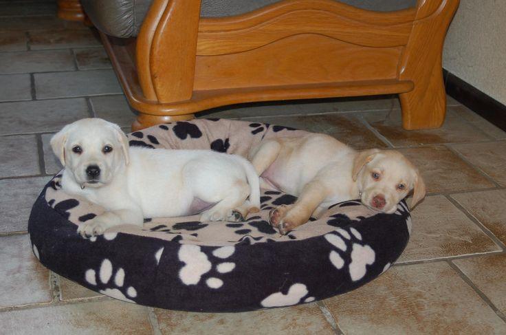 Wopke en Lieve 7 weken oud.