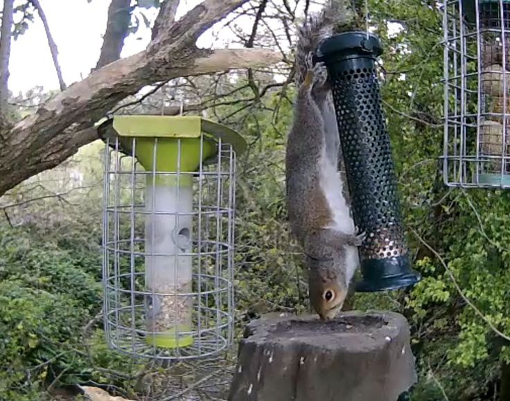 "Tamary on Twitter: ""Squirrel gymnastics equipment #SKWildMeadows https://t.co/EGZ6Uvw7Is"""