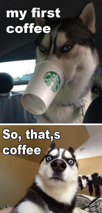 Huskys first Coffee