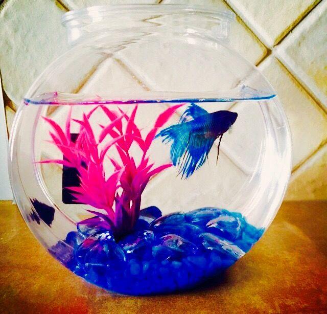 My Mr. Bubbles!!!!!RIP