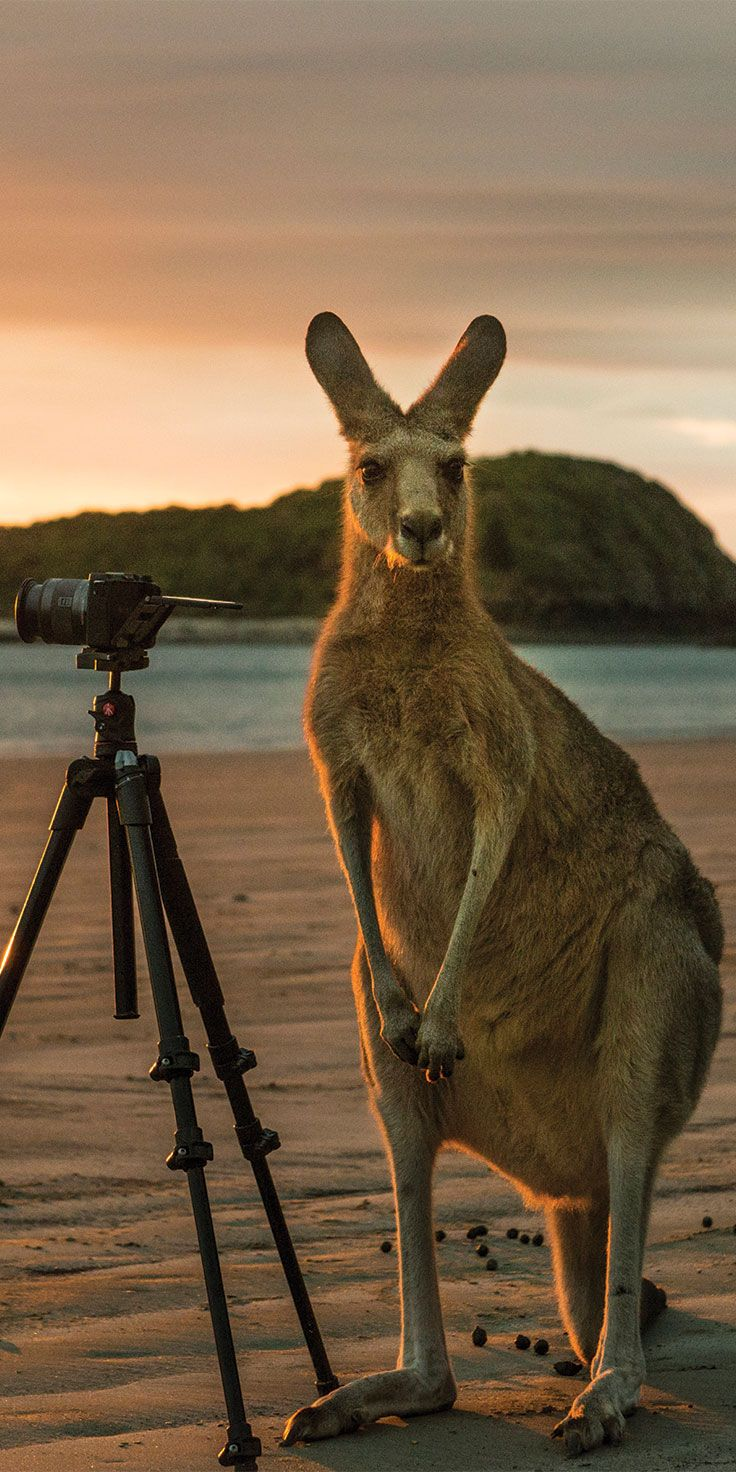 An unlikely photographer in Cape Hillsborough National Park - by @visitqueensland